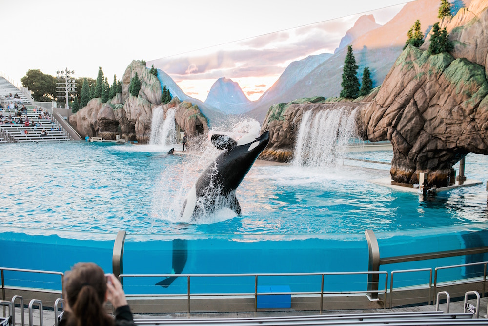 Exploring the ethics of Whale and Dolphin Captivity with marine biologist Dr. Naomi Rose