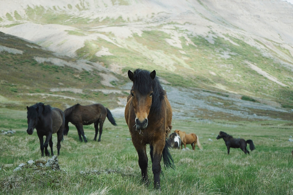 Yes! Canada has Wild Horses! – Julie Woodyer