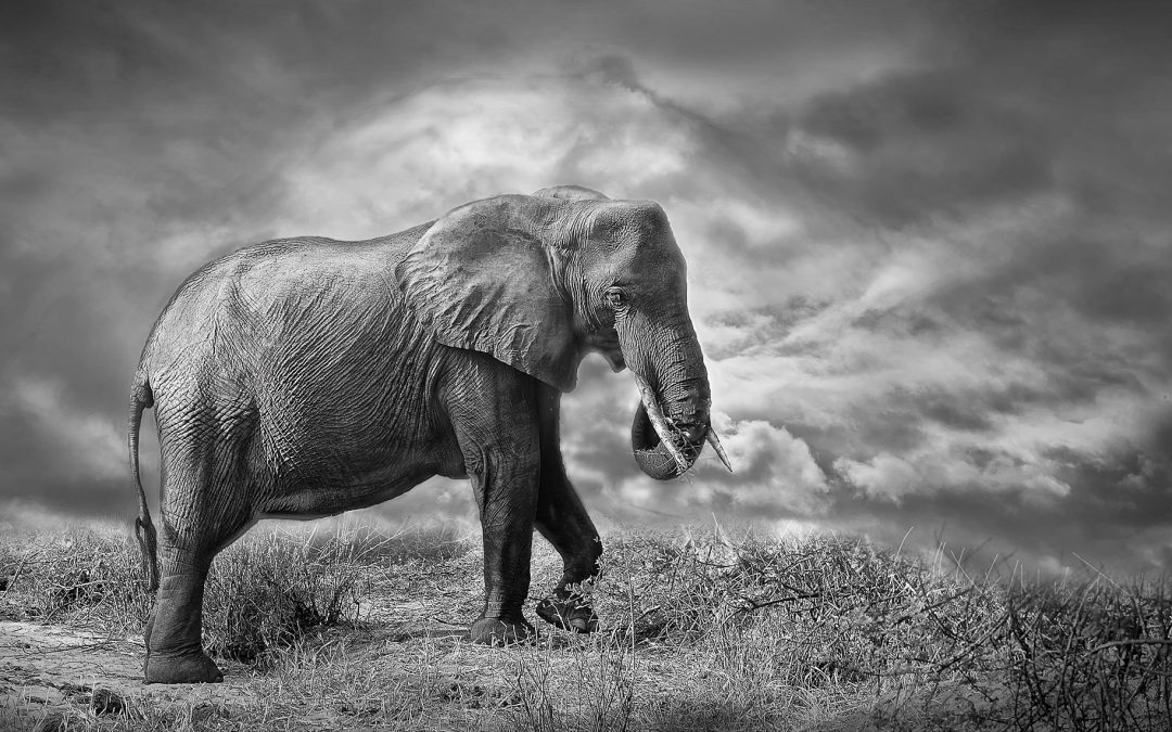 """""""The aftermath of Bill S-203 : Free Whales vs. Captive Elephants"""" with Kathryn Sussman and Rob Laidlaw"""